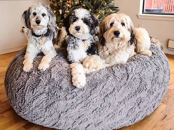 Three puppies on top of a beanbag