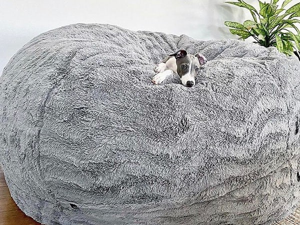 Dog snuggled on top of a beanbag