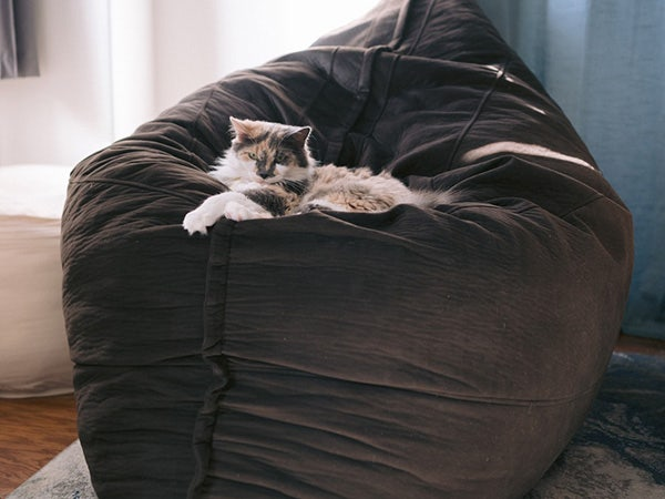 Cat on top of a beanbag