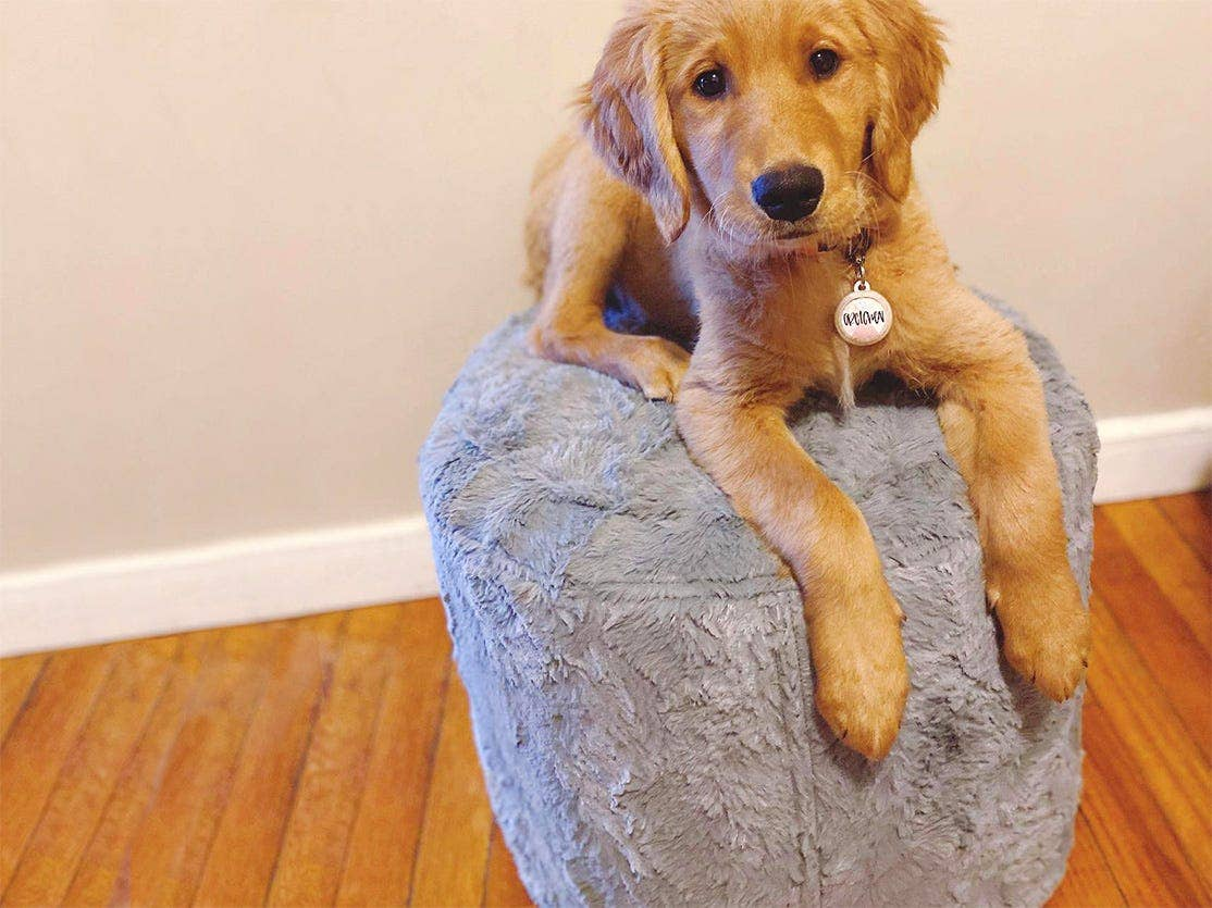 Puppy on top of a footrest/ squattoman.